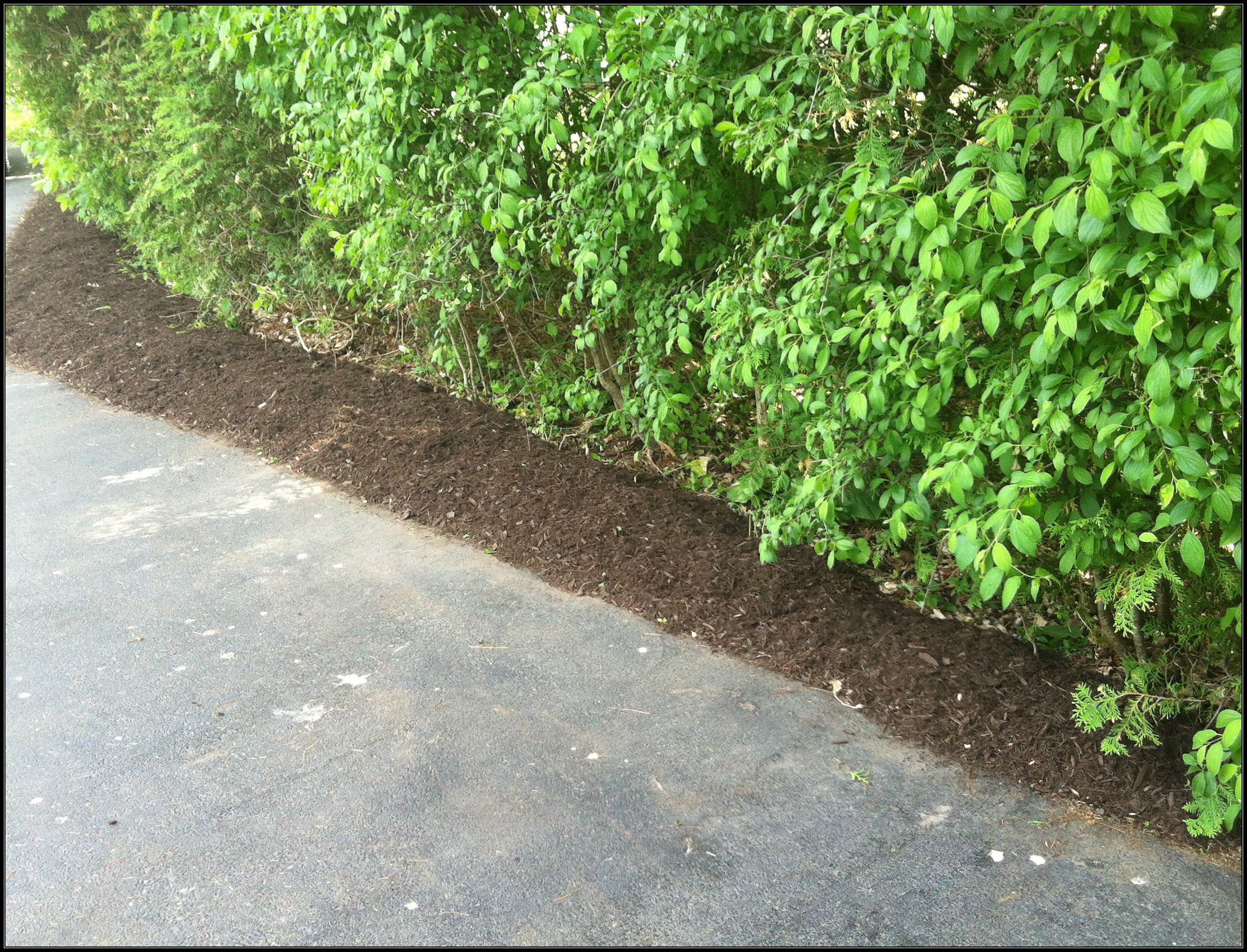 Driveway mulched
